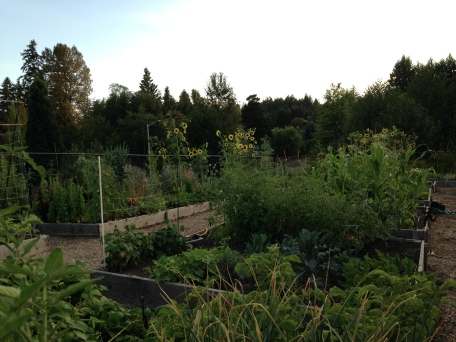 Garden fresh and farmers markets are very popular organic food sources for families