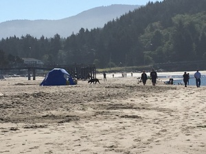 Daytime drifter and homeless shelters occur in not so obvious settings. But blend well into seasonal beach activities.